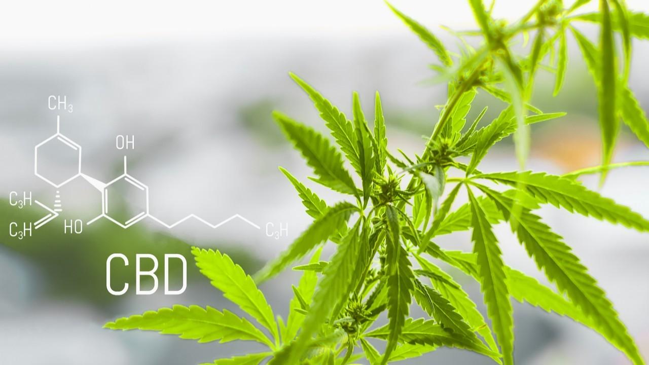 Spotlight: Cannabidiol (CBD) Based Medication Heralds New Promise in Neurological Therapies