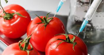 gmo-tomato