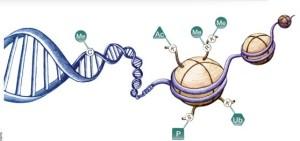 DNA methyltransferase