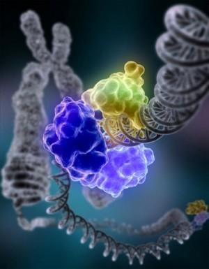 DNA_Repair