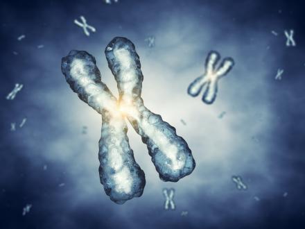 chromosome1