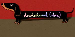 dachshundgene