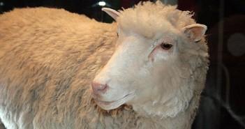 Dolly_face_closeup