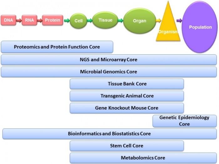 臺大基因體中心核心實驗室架構圖