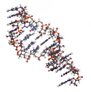 miRNA 結構圖