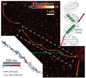 上圖為 DNA 鏈的超解析度影像,從 DNA 片段中測量出分子結構的方向與位移。來源:https://www.osapublishing.org/optica/fulltext.cfm?uri=optica-3-6-659&id=344851