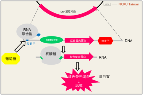 bacterialdesign