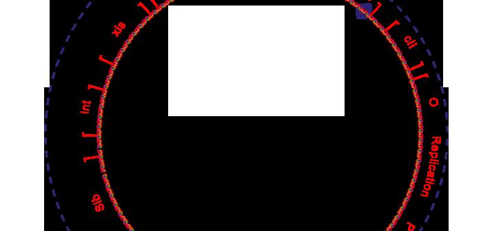 bacteriophage_lambda_genome