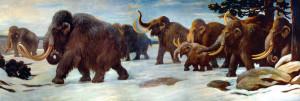 真猛瑪象散步圖,來源:By Charles Robert Knight - http://io9.com/5891441/celebrating-charles-r-knight-the-artist-who-first-brought-dinosaurs-and-megafauna-to-life, Public Domain, https://commons.wikimedia.org/