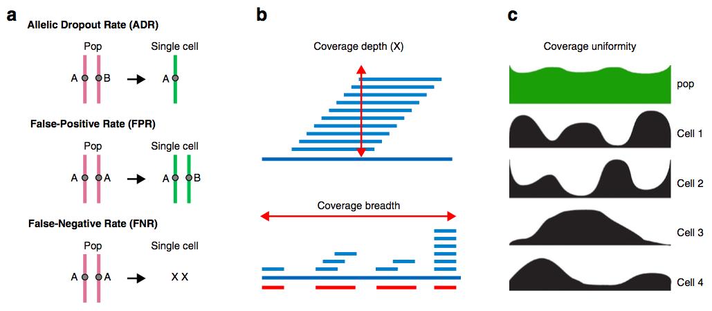 圖一 單細胞序列分析常見的偏誤(a)對偶基因丟失、偽陽性或是偽陰性而造成覆蓋率不,其中 Pop 指細胞群體(a population of cell)(b)覆蓋率的度量包含覆蓋深度(coverage depth)以及總物理覆蓋率(total physical coverage),也就是覆蓋廣度(coverage breadth)(c)覆蓋一致性(coverage uniformity)隨著不同細胞而有差異。