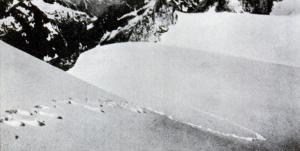 1937 年攝影師 Frank S. Smythe 拍到疑似雪人腳印的照片,刊登於 1952 年的《Popular Science》期刊。來源:Wiki。