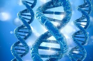 DNA_Neanderthals