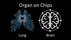 Organ on chips