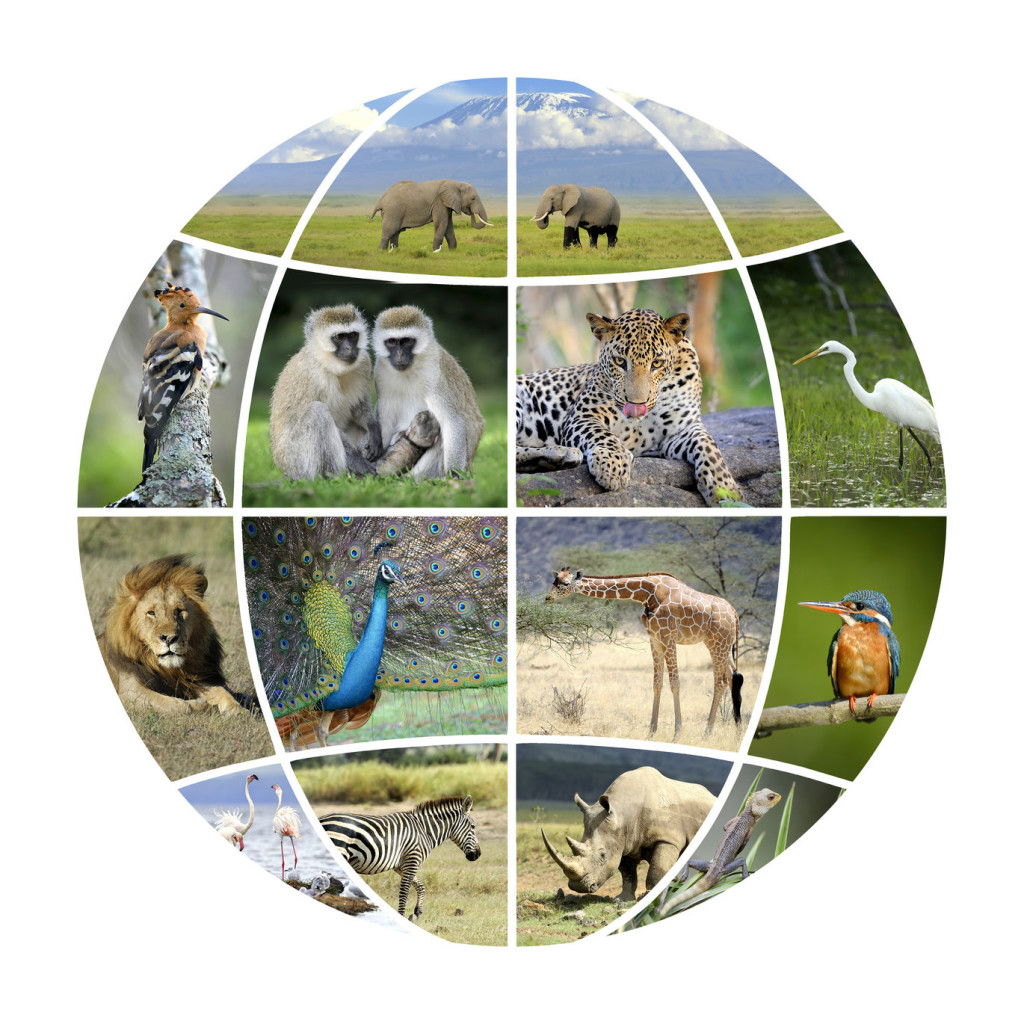 全球野生動物需要大家共同守護!