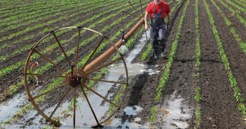 47167009 - agricultural scene, farmer in paprika field and irrigation system