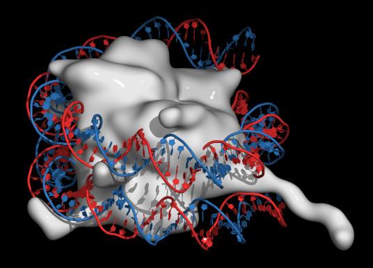 AI 分析 DNA 甲基化 神經瘤診斷新幫手