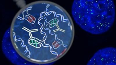 一位藝術家對細胞內 i-motif DNA結構和其檢測工具的印象。插畫作者:Chris Hammang