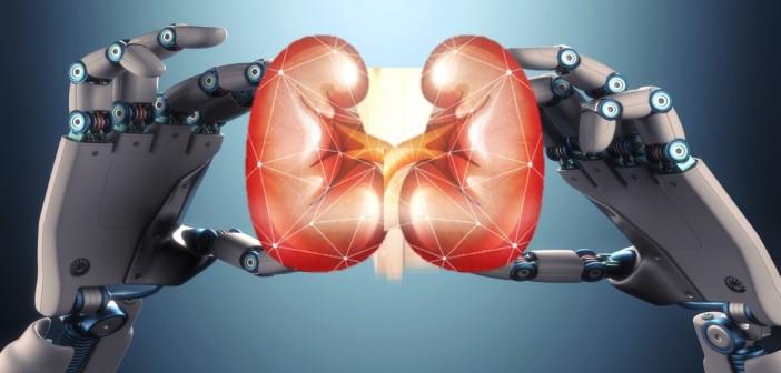 Robots grow mini-organs