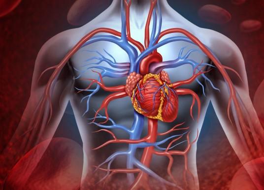 外來巨噬細胞喧賓奪主 恐使心臟受損惡化
