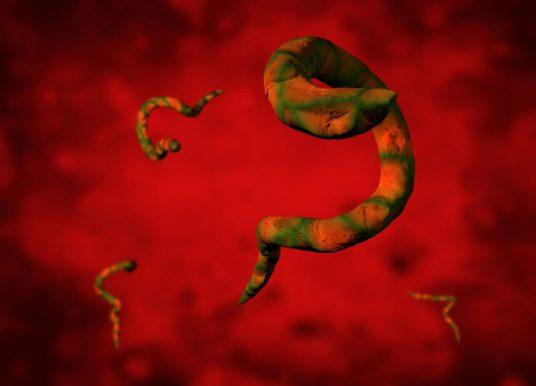 知敵之可擊 基因體研究讓寄生蟲無所遁形