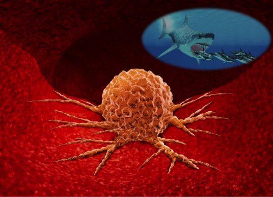 轉移性癌細胞如何侵入正常組織? 如同鯊魚的掠食活動模式