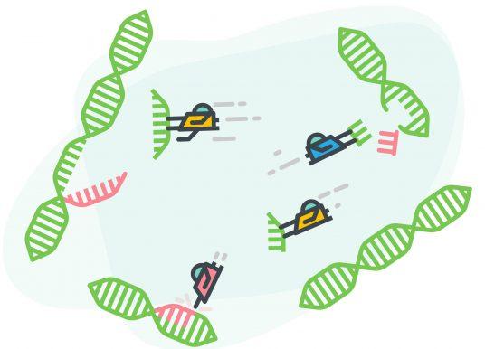 基因編輯再突破! CRISPR-CasX 更小且免疫排斥低