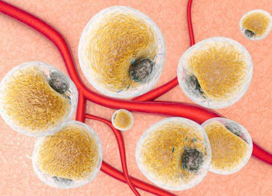 脂肪細胞釋放胞外體 可望調控巨噬細胞代謝與發育