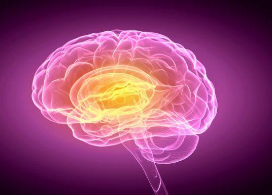 幹細胞衍生血腦障壁晶片誕生 神經疾病藥物篩選更進一步