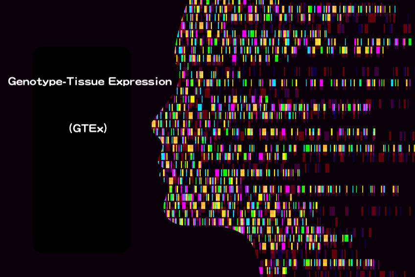 10 年有成!GTEx 發布跨細胞、組織的基因調控變異全面圖譜!