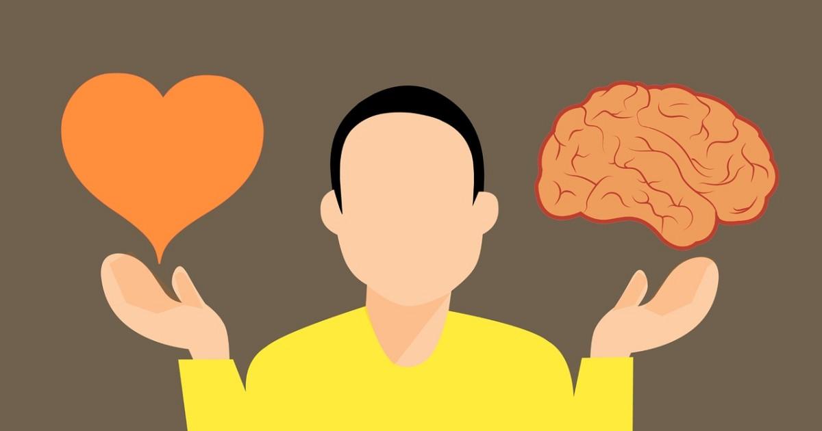 血清素影響哺乳類生物大腦發育!新研究證實neocortex體積與胚胎激素有關